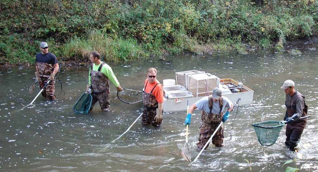 Lanesboro area fisheries biologists electro-fishing on a southeastern Minnesota trout stream.