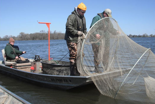 A Windom area fisheries crew sets a trap net.