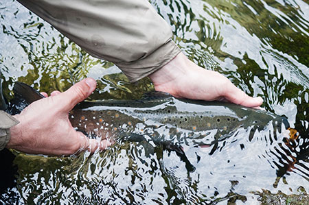Angler properly releasing a fish.