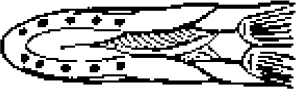 Illustration showing six or more pores under the northern pike's jaw