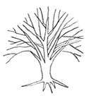 drawing of dead Elm tree