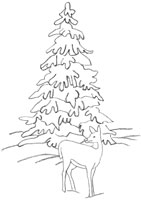 drawing a snowy spruce
