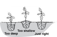 image of how to plant
