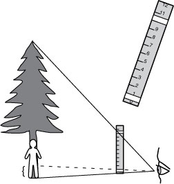 image showing measuring height of tree