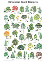 Minnesota Forest treasures poster