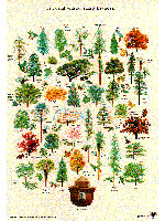Smokey Bear nature posters