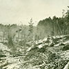 During logging operation in the 1800s and early 1900s, slash piles of limbs and small logs dotted the landscape.