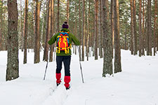person skiing through snow covered pine forest