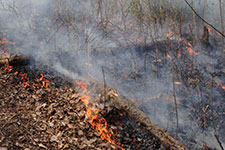 ground view of small fire burning brush