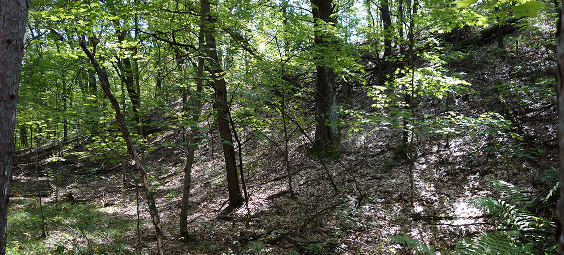landscape of northern pin, northern red, and white oak