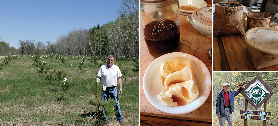 photo collage of a planting seedlings, maple syrup, birch baskets, tree farm sign