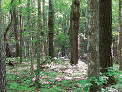 Central Mesic Hardwood Forest