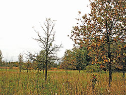 Southern Dry-Mesic Oak Woodland