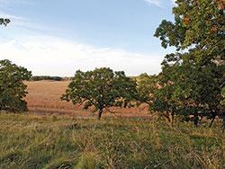 Southern Dry Savanna