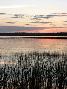 Sunset reflecting off a lake with reed grass in forground