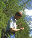 Photograph of Tree Inspector