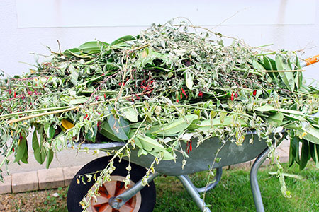 wheel barrow full of weeds and plant cuttings.