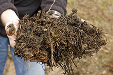 compost of twigs and leaves