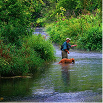 Angler wading in stream fishing for trout