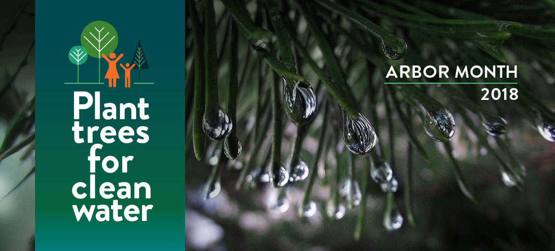Plant trees for clean water. Arbor Month 2018. Glistening water droplets at end of pine tree needles.
