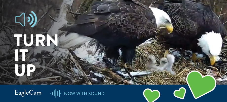 DNR EagleCam