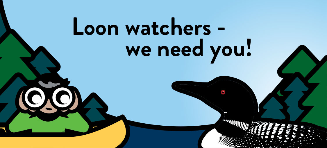 Loon watchers - we need you! Illustration of person in a canoe with binoculars watching a loon.