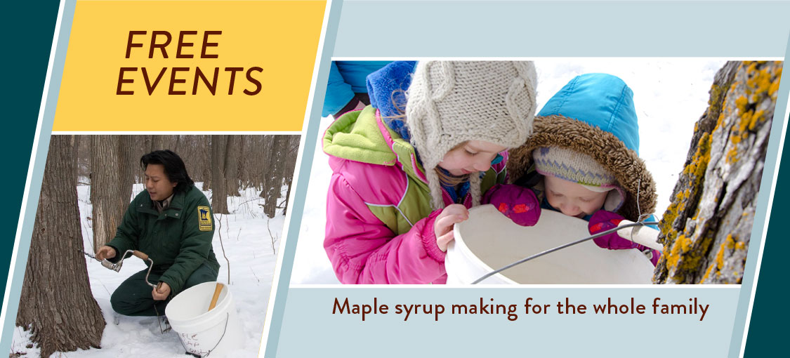 Free maple syrup making events