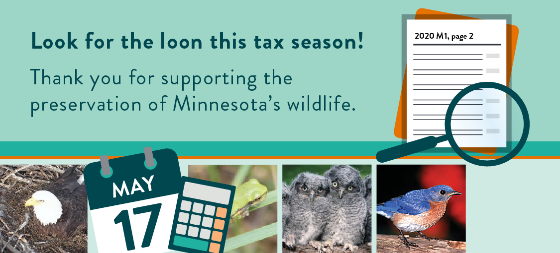 Text that reads Look for the loon this tax season. Thank you for supporting the preservation of Minnesota's wildlife