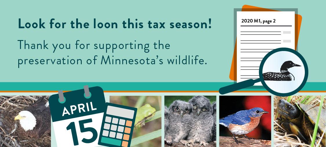 Support wildlife during tax season