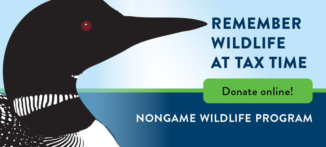 Donate to Nongame Wildlife. Illustration of a loon.