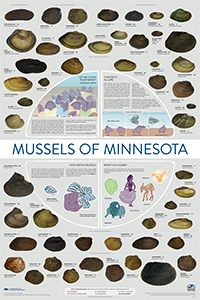 Mussels poster thumbnail