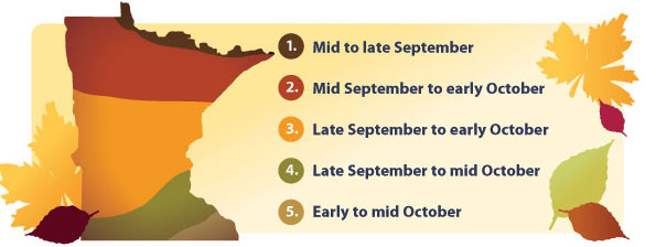 Typical dates for peak fall colors in Minnesota1. Mid to late September2. Mid September to early October3. Late September to early October4. Early to mid October5. Late September to mid October