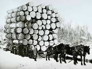historical photo of harvested log on snow skidds pulling by horses