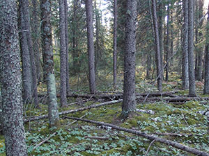 view to forest showing tree trunks and downed trees on forest floor.