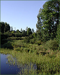 View of a healthy wetland