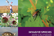 cover of the 2017 invasive species calendar