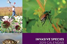 cover of the 2017 invasive species calendar