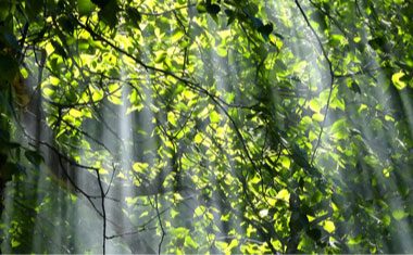 sinlight coming through tree branches