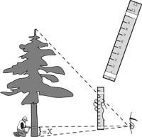 graphic: measuring height of tree