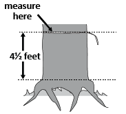 illustation showing a tree that has heaved and where to measure.