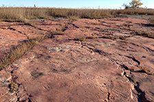 carved images in rock at jeffers petroglyphs