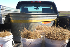 prairie grasses in the back of a truck