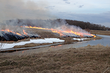 An early spring burn in March resets and regenerates this remnant prairie while also targeting undesirable non-native species like smooth brome (Bromus inermis).