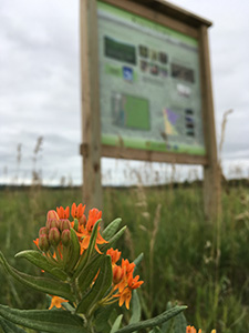 Butterfly milkweed (Asclepias tuberosa) blooms in front of the Kasota SNA sign. Kasota is one of the landowner featured today, Henry's favorite prairies.