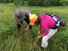 DNR Scientists, Rhett Johnson and Jessica Petersen, stop to weed invasives out of a hillside prairie during a plant identification training