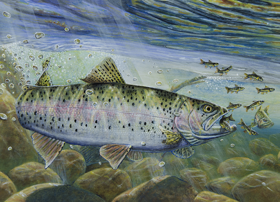 Melissa Mickelson won the trout and salmon stamp contest with a painting of a rainbow trout