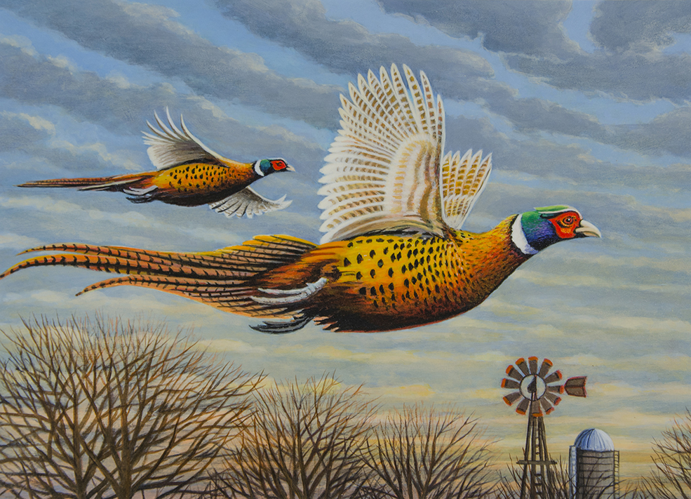 2020 Pheasant Stamp Competition. First Place: Mark Kness
