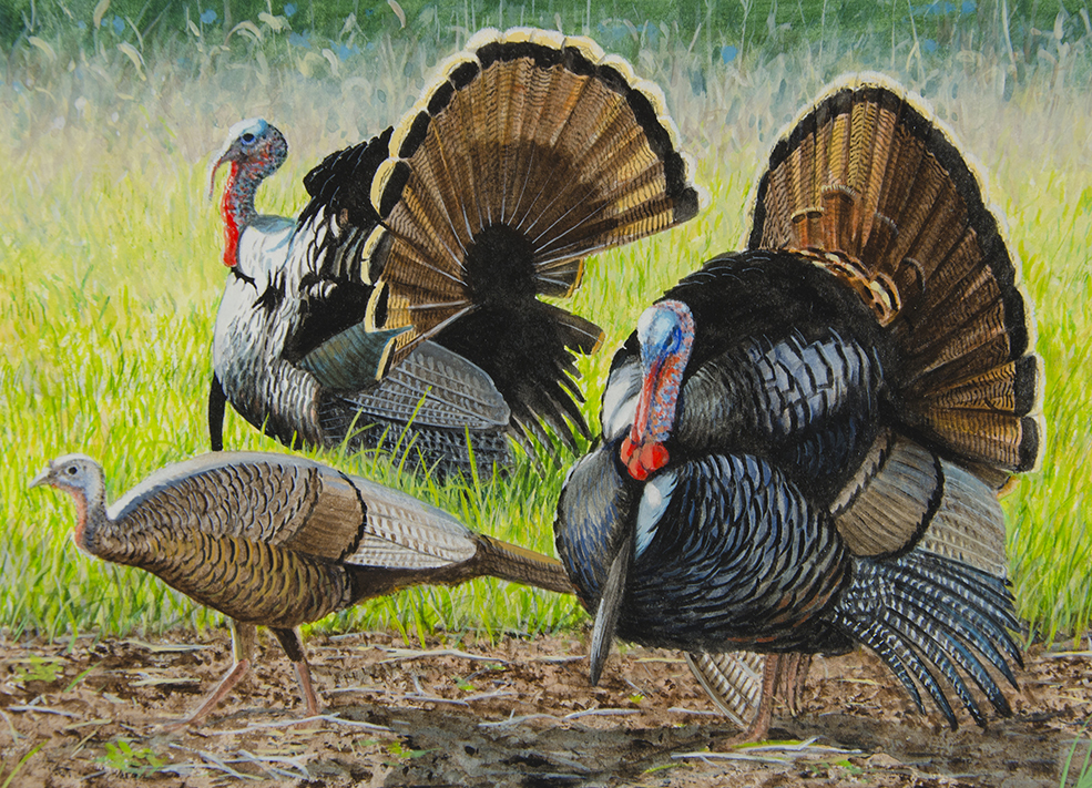 2021 Turkey Stamp Competition. First Place: Stephen Hamrick