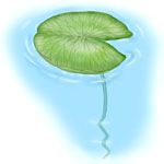 Aquatic Plant Quiz