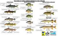 Fish ID Guide